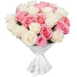 Букет из 25 белых и розовых эквадорских роз