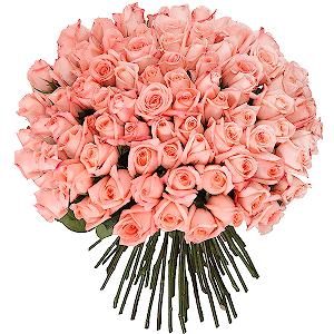 Букет 101 розовая эквадорская роза