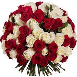Букет из 101 красной и белой эквадорской розы